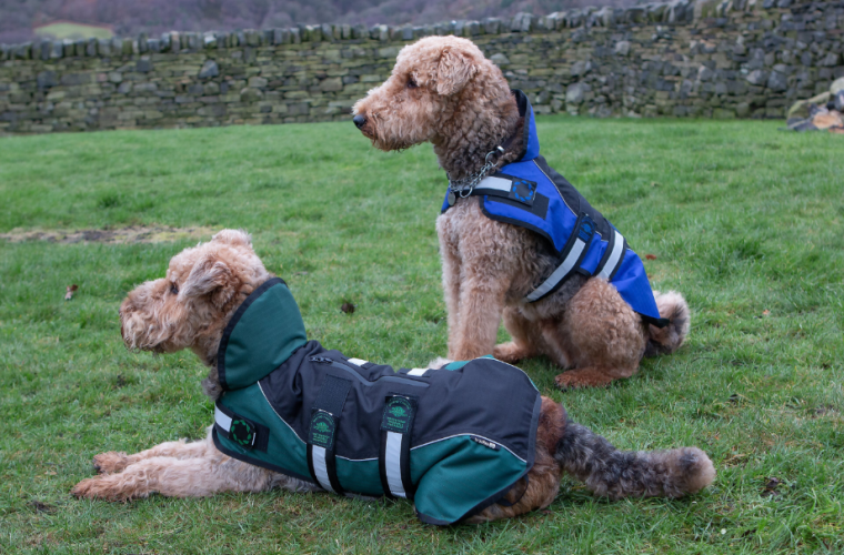 Two dogs wearing Animate coats
